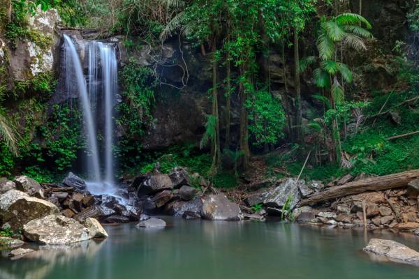 Curtis Falls, Mt Tambourine